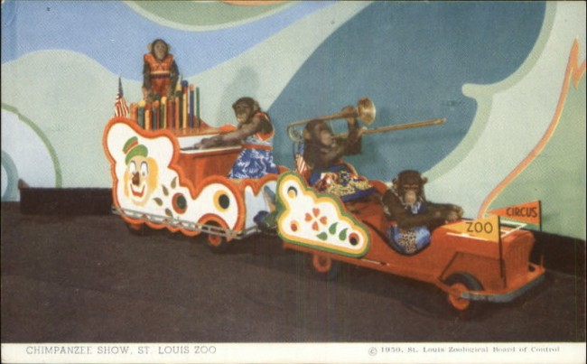 1950-chimpanzee-stlouis-zoo-jeep-train-postcard1