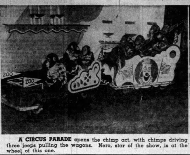 1950-05-20-st-louis-globe-circus-chimp-jeep-drive2-lores