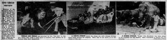 1950-05-20-st-louis-globe-circus-chimp-jeep-drive3-lores