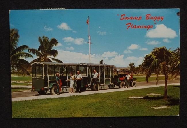 swamp-buggy-flamingo-fl-postcard