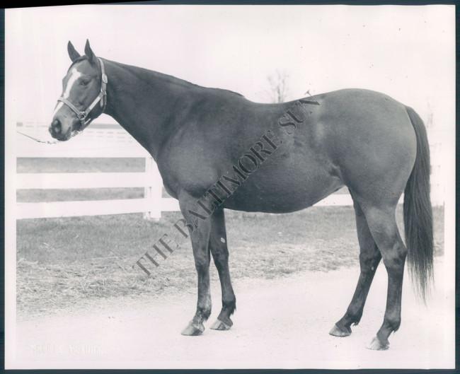 horse-named-belle-jeep-baltimore-sun