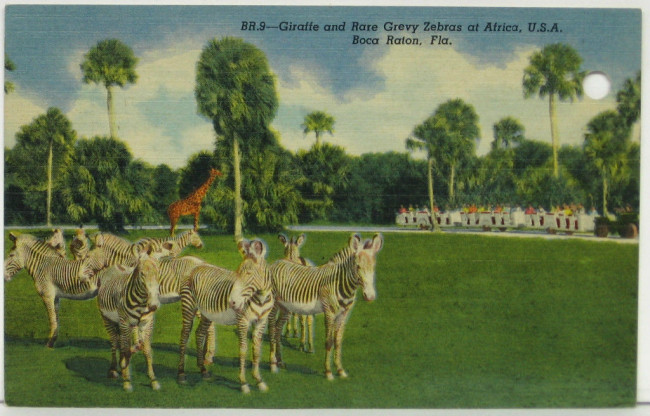 jeep-train-africa-usa-postcard1
