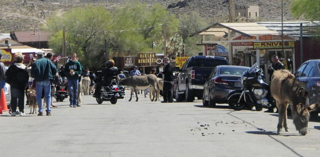 2014-04-02-kingman-route-66-oatman4