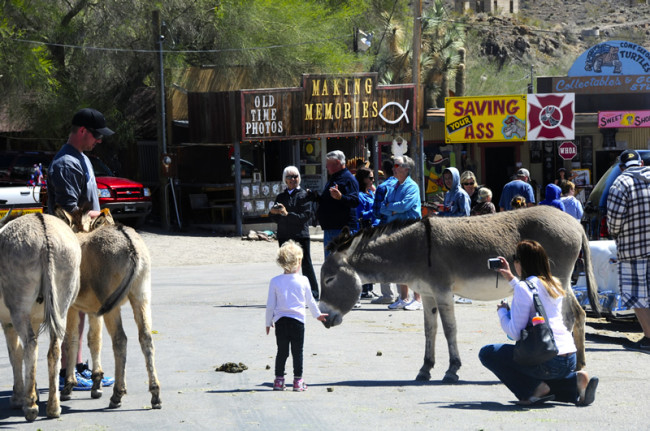 2014-04-02-kingman-route-66-oatman5