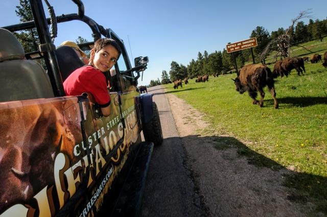 south-dakota-buffalo-jeep-tour2