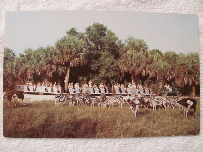 africa-usa-jeep-safari-postcard1