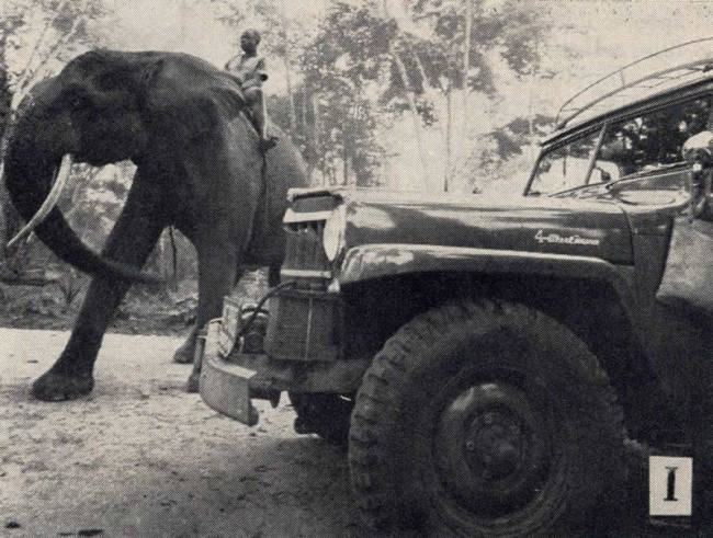 1955-09-willys-news-africa-tarzan1