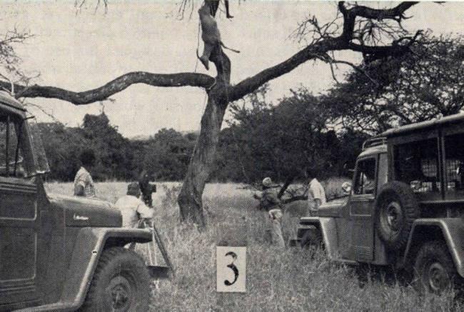 1955-09-willys-news-africa-tarzan3