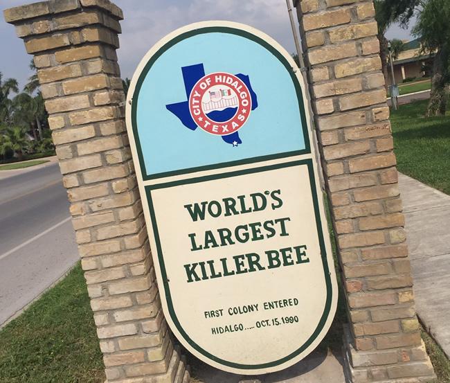 2015-05-07-killer-bee4