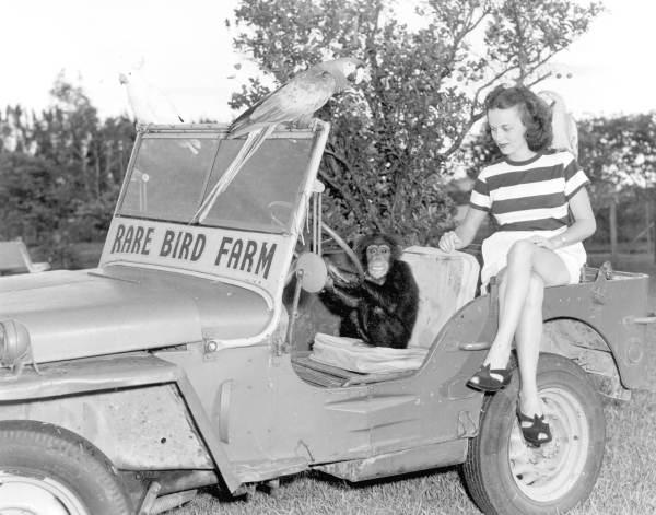 1948-frances-freeman-rare-bird-farm2