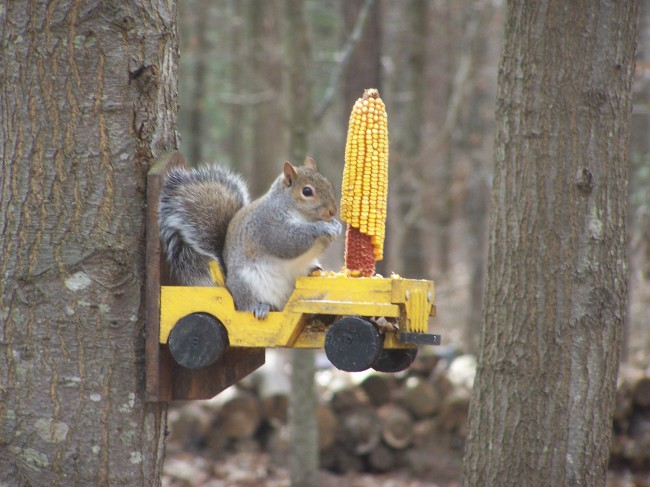 squirrel-jeep-feeder