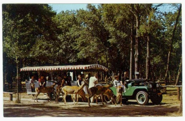 1965-wisconsin-dells-jeep-train-postcard1