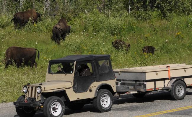 2017-07-31-bison2