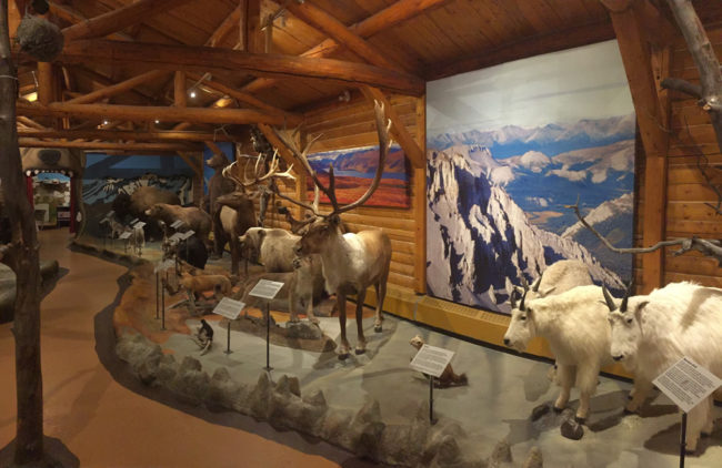2017-08-08-whitehorse-museum3