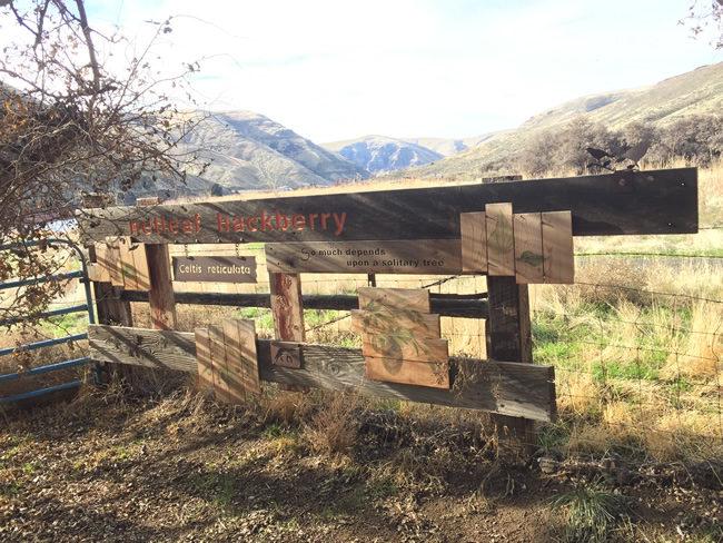2018-01-18-19-cottonwood-canyon-camping10