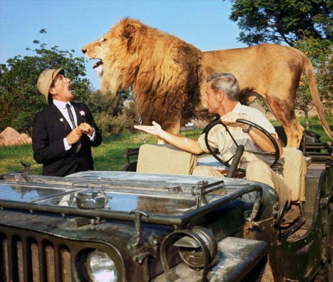 Prod DB © Ivan Tors Films - Metro-Goldwyn-Mayer / DR DAKTARI (CLARENCE, LE LION QUI LOUCHAIT/CLARENCE, THE CROSS-EYED LION) de Andrew Marton 1965 USA avec Richard Haydn et Marshall Thompson afrique, safari, jeep, animal sauvage, casque colonial, fauve, rugir