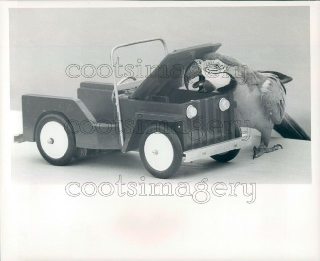 1967-macaw-toy-jeep1