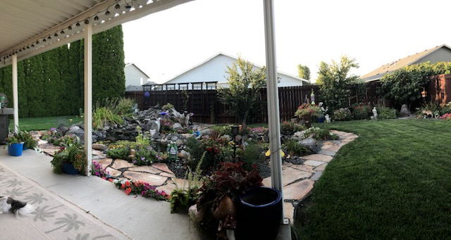 summer-2019-backyard