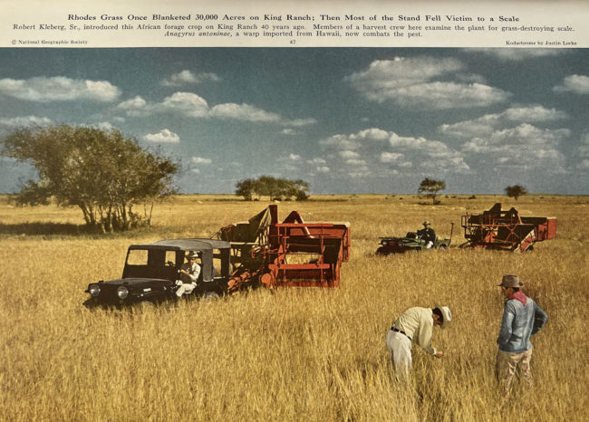 1952-01-nat-geographic-king-ranch-jeeps-photo1